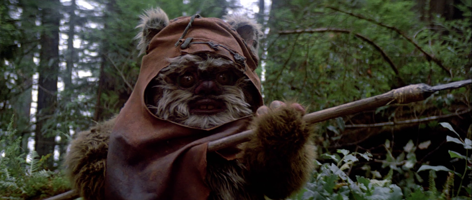 Image result for wicket the ewok