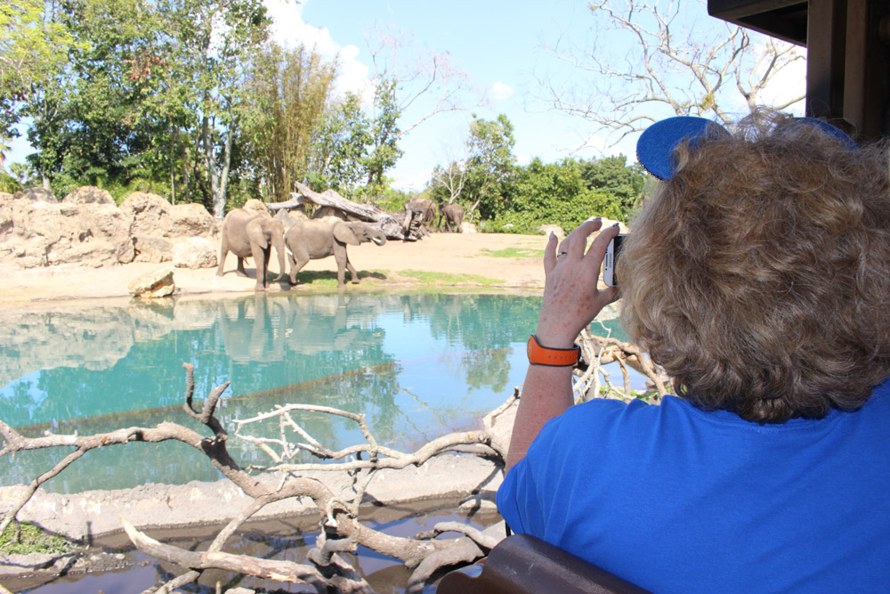 Lavonne takes in the wildlife on the Kilimanjaro Safari in Disney's Animal Kingdom.